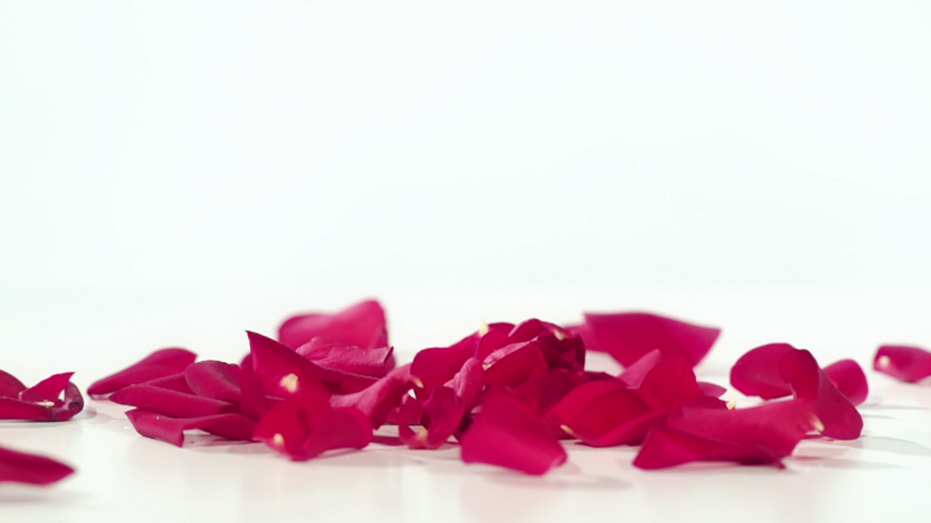 The Bexhill Florist Slide Background Flower 2