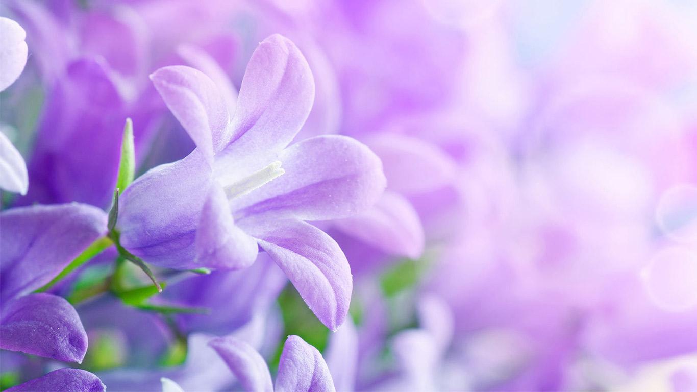 slide-background-flower-8b